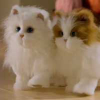 LULU'S WALKIN' KITTIES TV Commercial
