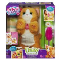 Daisy, kom speel met mij katje